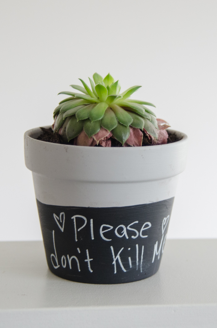 How fun are these!? DIY Chalkboard Dipped Plant Pots