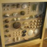 DIY BEACH SEABEAN SHADOWBOX