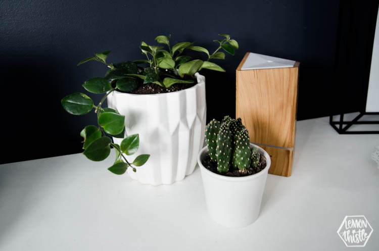 plants in white pots grouped with wooden diffuser on bedroom dresser