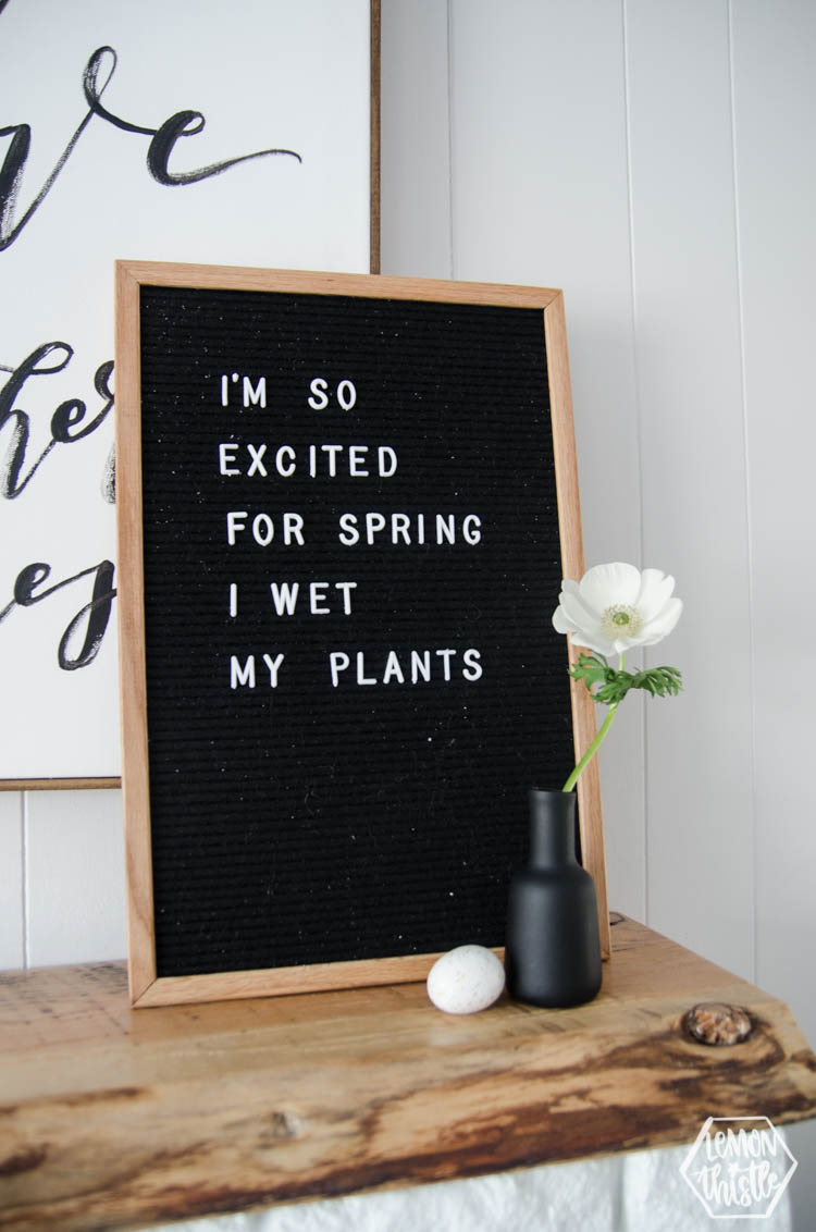 Spring Letterboard: I'm so excited for spring I wet my plants