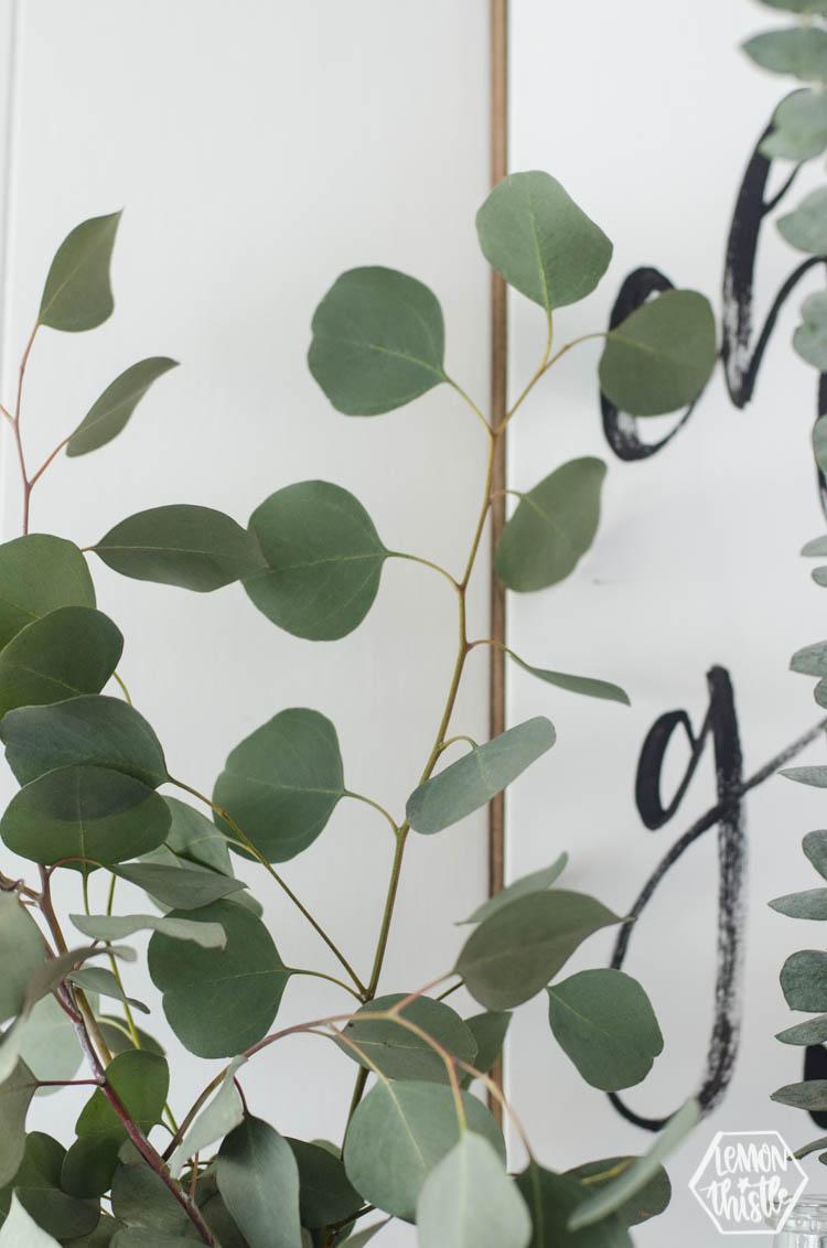 Silver Dollar Eucalyptus: Close Up