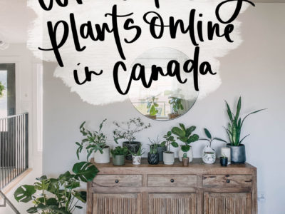 Where to buy plants online in canada