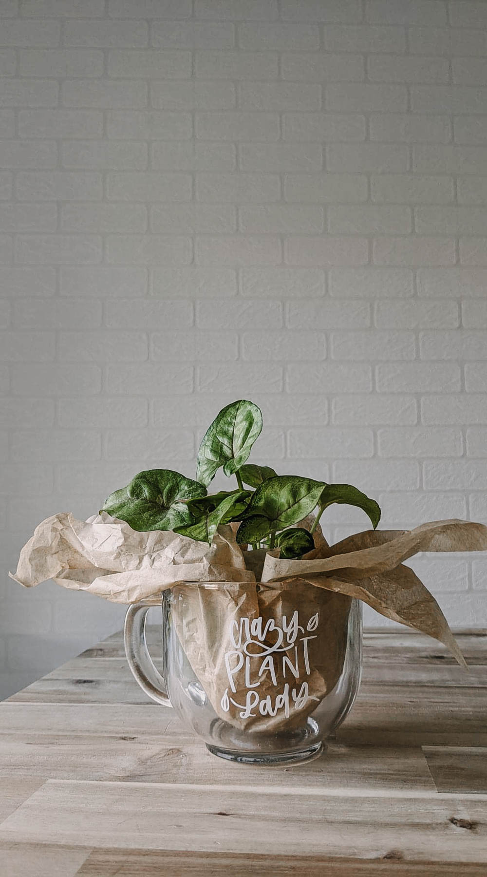Cute gift idea for a plant lover