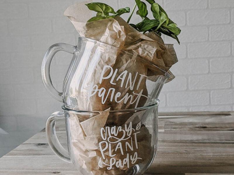 plant mugs