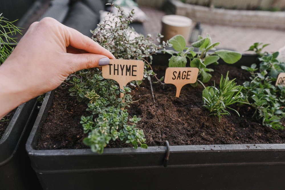 Herb Garden Plant Markers DIY