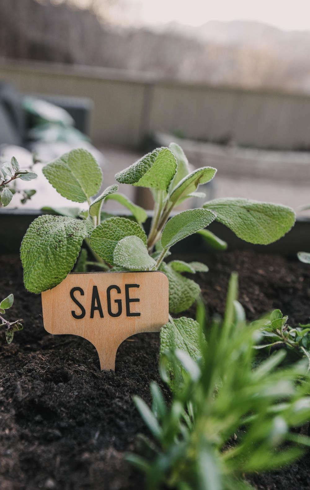 DIY Garden Markers (sage)
