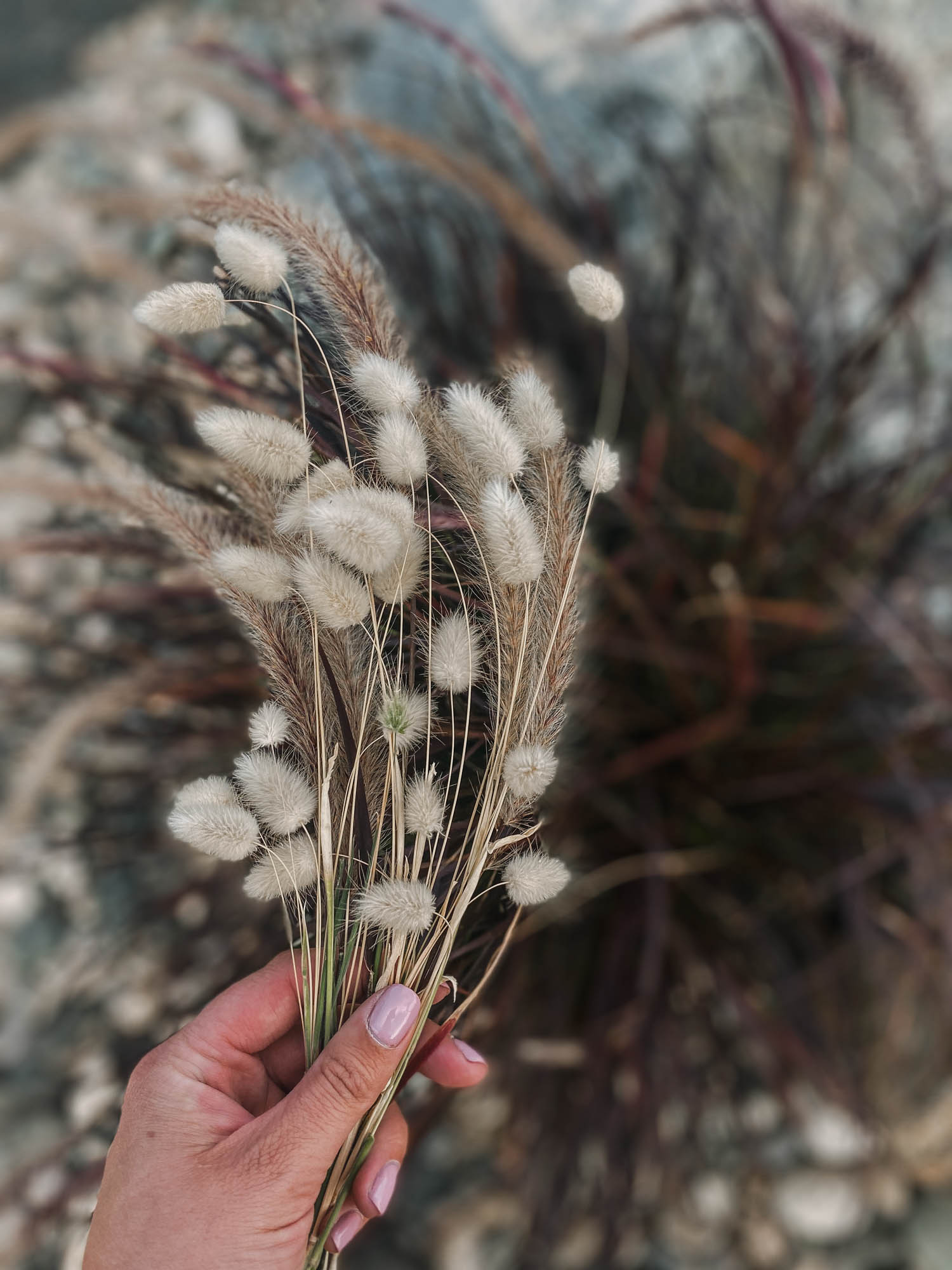 How to dry cut flowers and grasses for fall decor