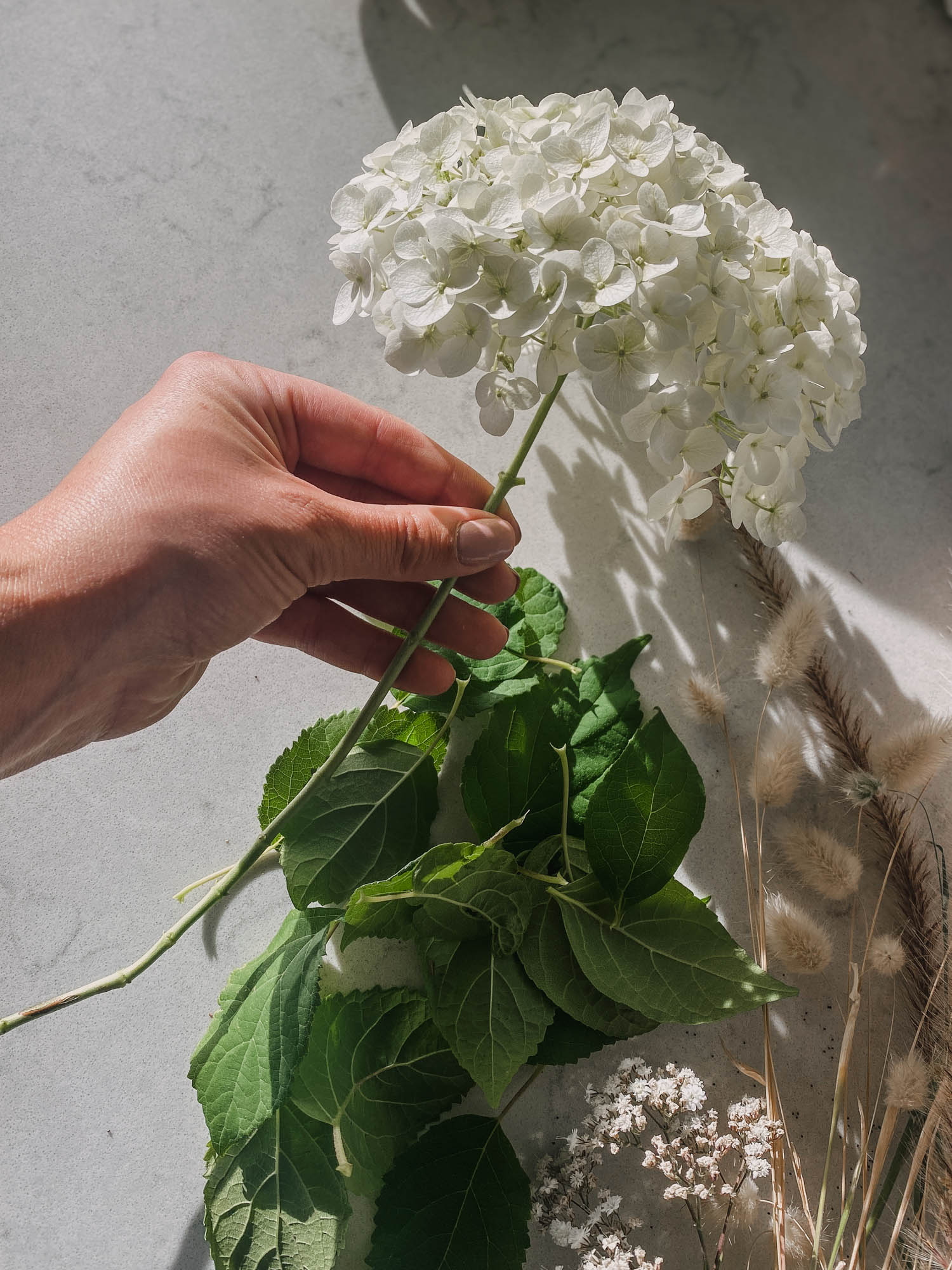 Remove leaves before drying cut flowers
